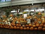 9 チェルシー かぼちゃ.jpg